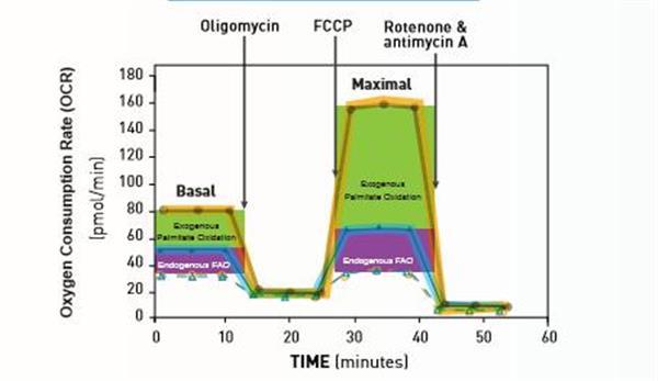 Seahorse XFe细胞能量代谢分析