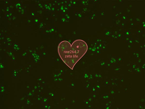 Zeta Life Advanced DNA RNA转染raw 264.7经验分享