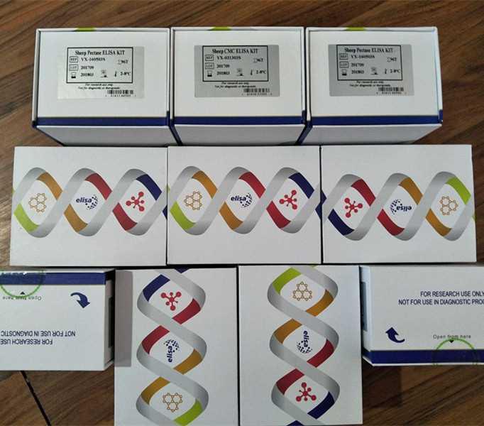 小鼠(Mouse)抗苗勒管激素(AMH)ELISA检测试剂盒|老品牌赫澎生物值得信赖