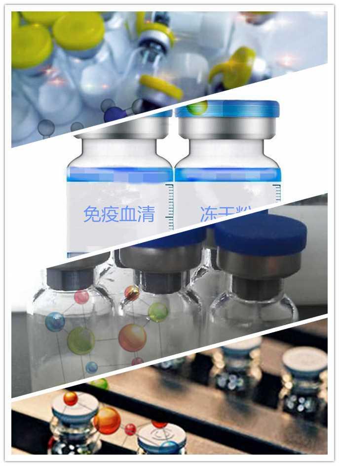 重组人胰岛素生长因子-1(rh-IGF-1)现货供应