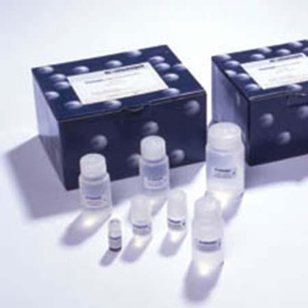 细胞培养革兰氏阴性细菌污染定性荧光检测试剂盒20次
