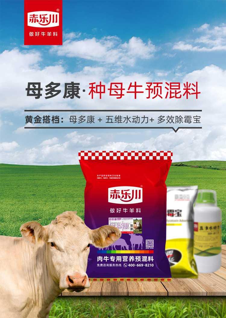 利木赞牛种牛母牛饲料防流产
