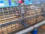 北京钢筋绕丝机新闻