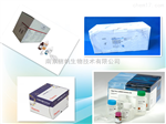 小鼠B淋巴细胞瘤检测试剂盒 BCL 10 elisa kit科研专用