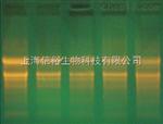 填入法DNA末端标记试剂盒A