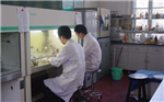 western blot技术服务,实验代测