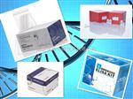 大鼠IgM elisa试剂盒,免疫球蛋白M检测