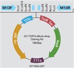 GV TOPO-Blunt-Amp Cloning Kit