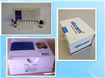 大鼠IL-12 p35 elisa试剂盒,白介素12 p35检测