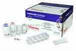 小鼠基质金属蛋白酶13 elisa试剂盒,基质金属蛋白酶13检测