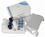 大鼠转化生长因子β1(TGF-β1)ELISA检测试剂盒