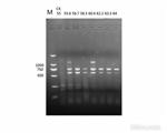 普通电泳PCR技术服务