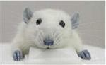 细胞实验技术服务,细胞培养,细胞转染,细胞迁移实验等技术服务外包
