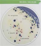 尿道病原菌显色培养基
