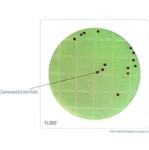 HiTouch™ 大肠杆菌和大肠菌群计数平板。