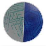 快速大肠菌群显色培养基