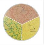 大肠杆菌和大肠菌群鉴别计数培养基(膜过滤法)