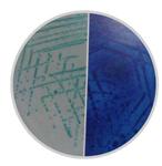 显色培养基快速大肠菌群显色琼脂