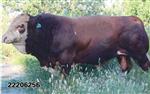 牛预混料价格肉牛预混料品牌