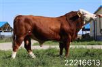 牛抗应激添加剂肉牛预混料哪个品牌的好
