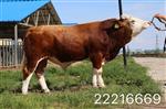 牛预混料价格牛预混料厂家