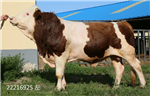 繁殖母牛预混料预混料十大品牌排行榜