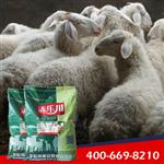 架子肉羊催肥专用的饲料