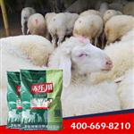 肉羊养殖场专用饲料