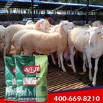 肉羊采食量低