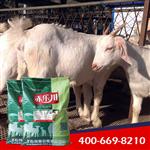 肉羊养殖使用的饲料