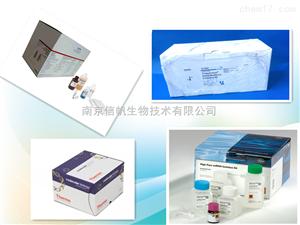 小鼠免疫球蛋白A检测试剂盒 IgA elisa kit
