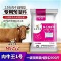 育肥牛十大疾病饲养方式