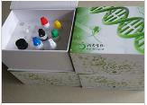 犬补体因子Bb(CBb)Elisa试剂盒