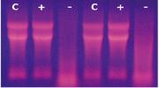 非冻型组织RNA 保存液
