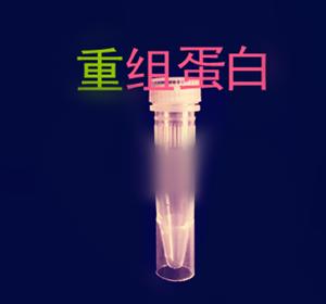 重组小鼠RTN4R蛋白 Recombinant Mouse RTN4R/NgR/Nogo-66 Receptor/Ret