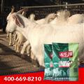 肉羊复合预混料公司