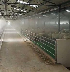 为什么养殖场喜欢安装喷雾消毒除臭设备。